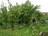 Strukturreicher Garten