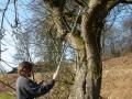 Baumhöhlenkontrolle